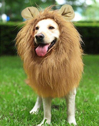 peluca leon perro oreja mane disfraz