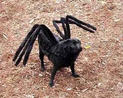 disfraz perro araña