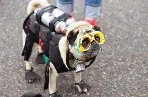 disfraz perro buzo