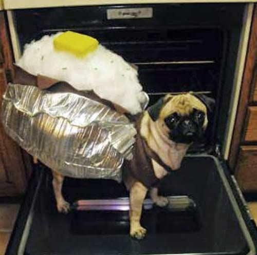 disfraz perro papa horneada