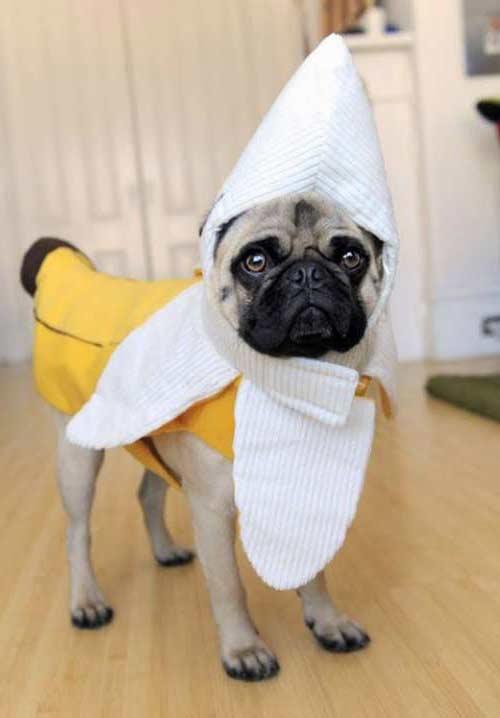disfraz perro platano