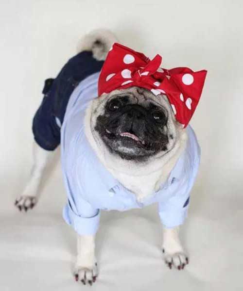 disfraz pin-up ropa moda perros