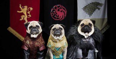juego de tronos reinos perros pug
