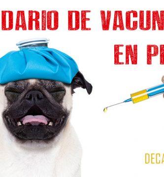 Calendario Vacunas Perros.Calendario De Vacunacion En Perros Cachorros Y Adultos