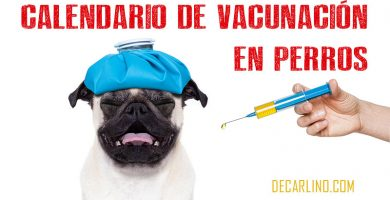calendario vacunas perros