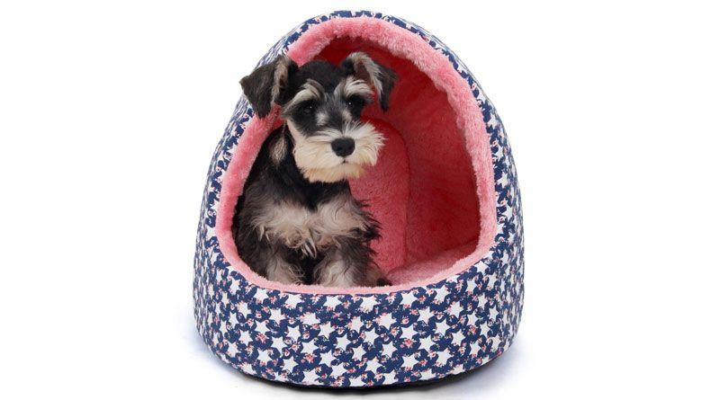 casa para perro interior