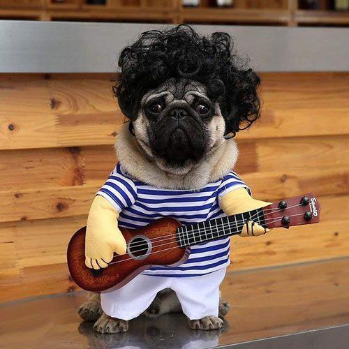 disfraces para perros pug carlino