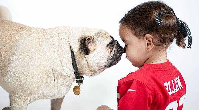 perros cachorros con niños