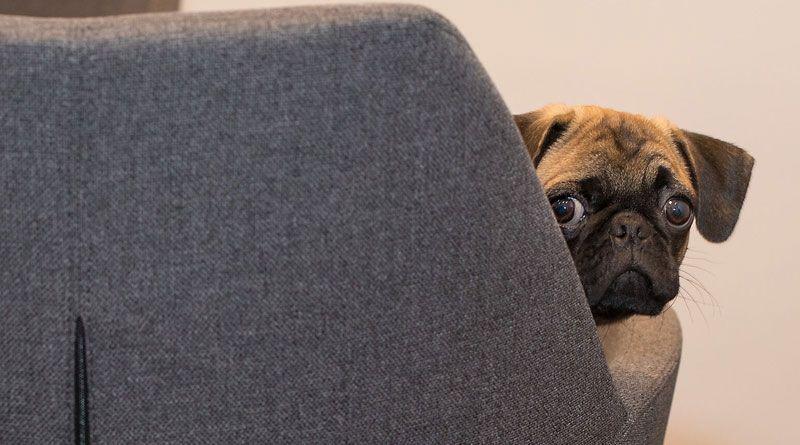perro miedoso