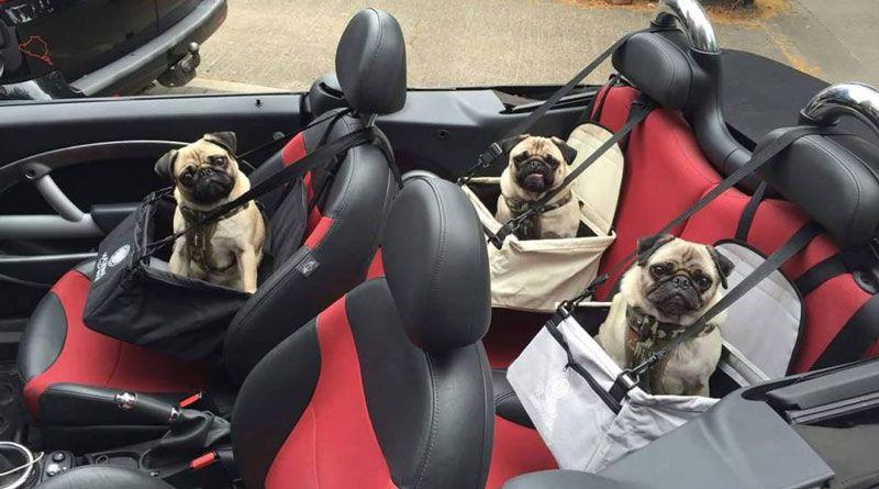 transportin perro para coches