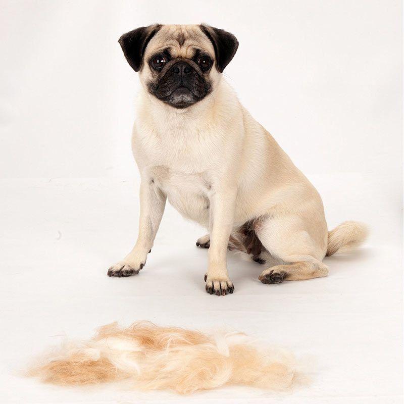 cepillo perro pelo corto