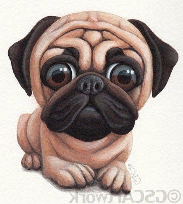 dibujo de perro pug