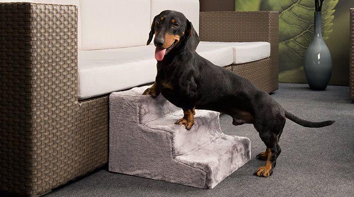 escalera perro sofa