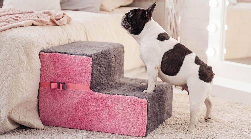 escaleras para mascotas pequeñas