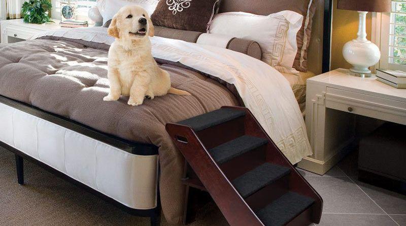 escalera perros cama