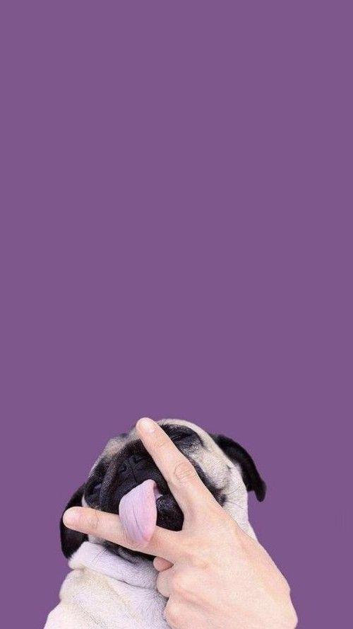 fondos de pantalla de perros cachorros