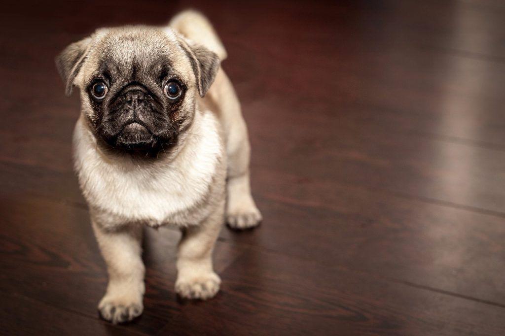 fondos para perros