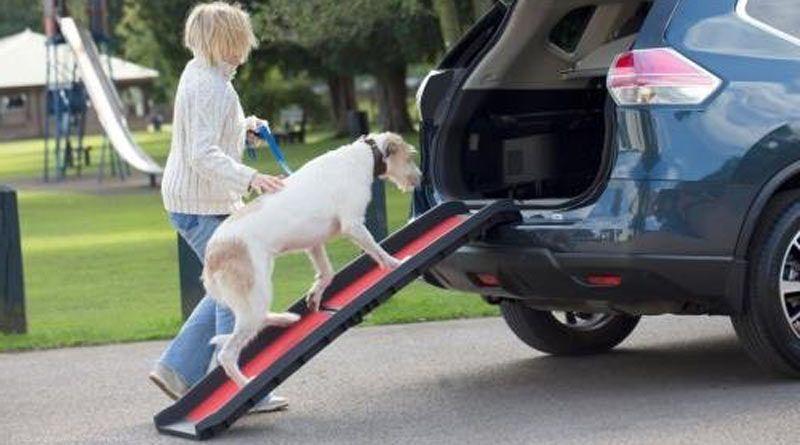 rampa para mascotas baratas
