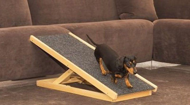 rampa perros cama