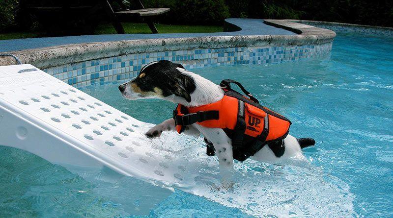 rampa salvavidas mascotas
