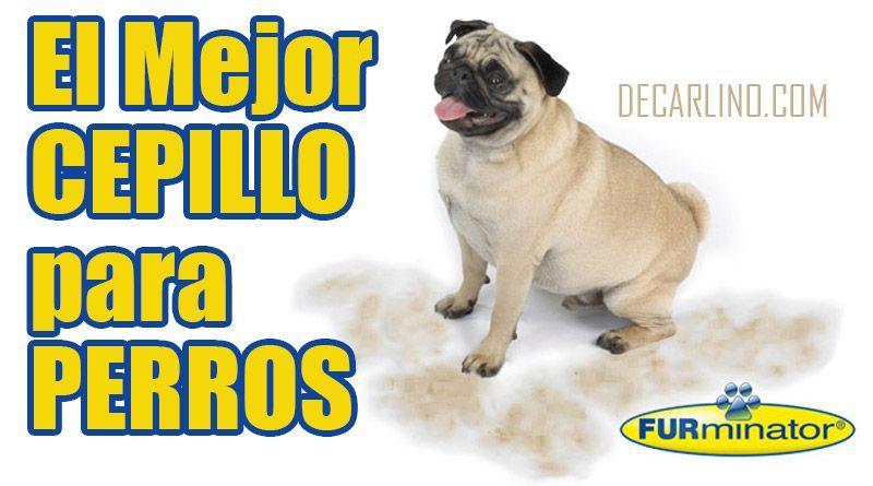 mejor cepillo para perros furminator pelo corto