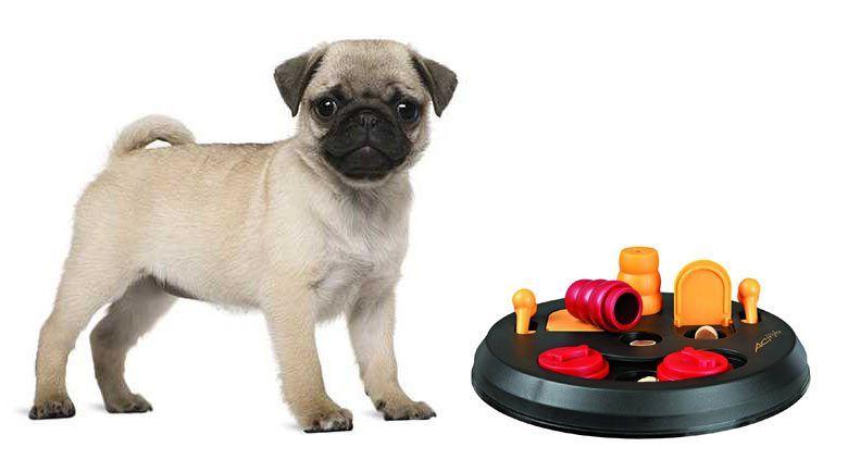 juegos para perros interactivos