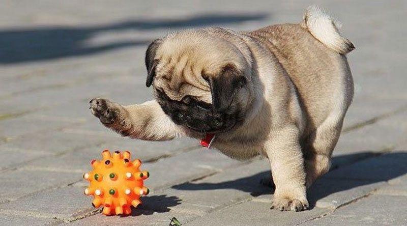 perro jugando a la pelota