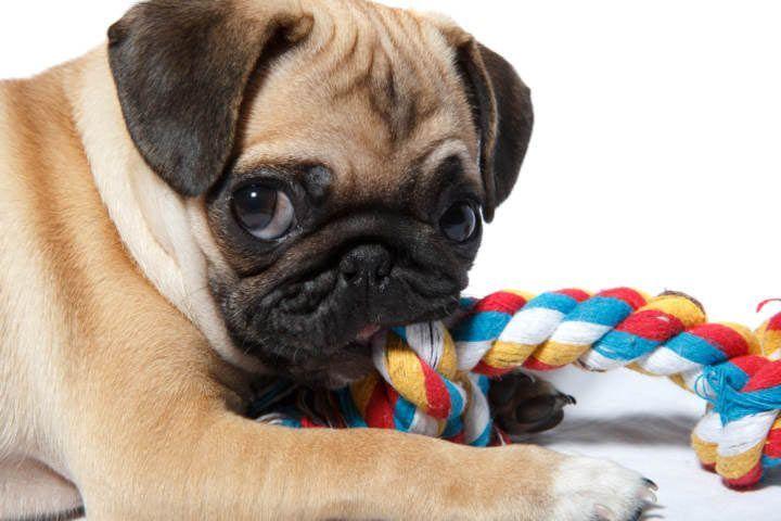 perro con cuerda