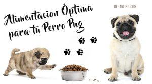 alimentacion perros pug