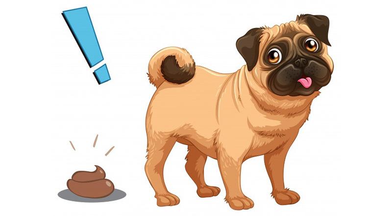 sintomas estreñimiento en perros